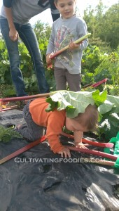 Man down! Rhubarb Hunting #cultivatingfoodies